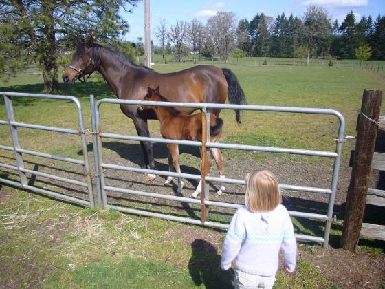 Sophie admiring the horses