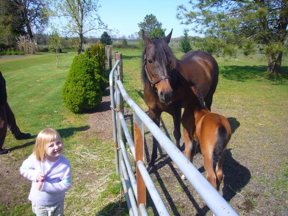 Sophie with the horses