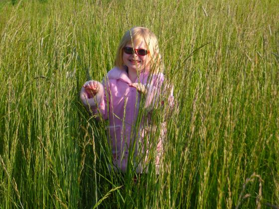 Ack, Sophie's lost in the tall grass!