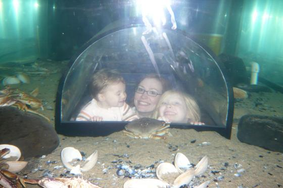 In the aquarium