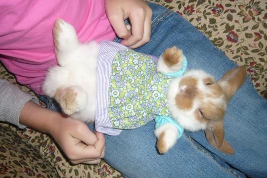 07_Bunny
